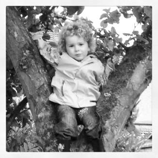 Ollie in Tree 16.06.12
